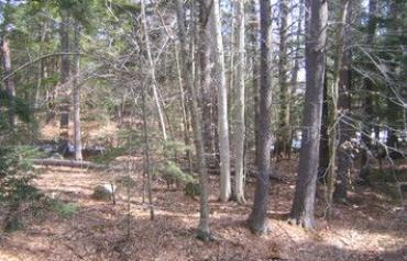 3 Large Permitted Building Lots