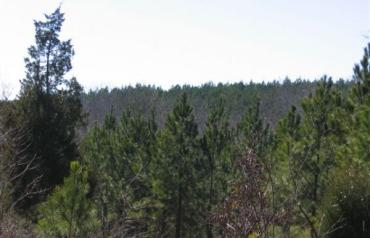 1500 Acres in Monroe County Georgia