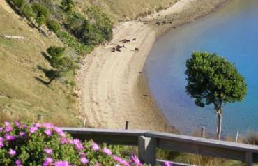 Beachfront freehold lifestyle