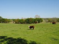 Oklahoma Multi-Tract Ranch Auction