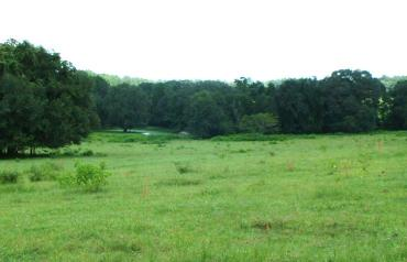 953 Acres (2,355 Hectares) Ranch - Farm For Sale
