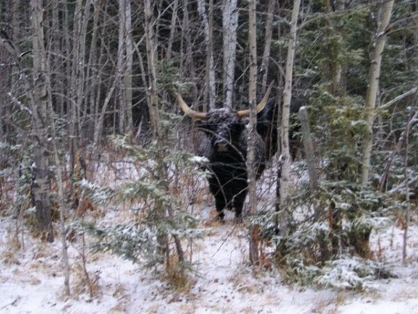 White Fox, Saskatchewan S0J 3B0 Canada
